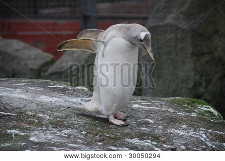 Penguin Flapping Wings