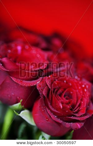 beautiful red roses on red background