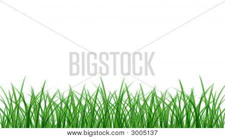 Grassback