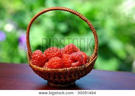Basket Of Red Raspberries In The Summer Garden
