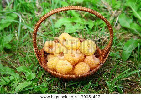 Basket Of Yellow Raspberries