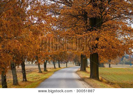 Road In The Autumn With Orabge Colored Trees