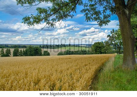 Rural Summer Landscape With Field,  Meadow And Forests