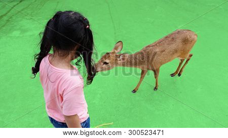 Child Feeding Wild Deer At Petting Zoo. Kids Feed Animals At Outdoor Safari Park. Little Girl Watchi