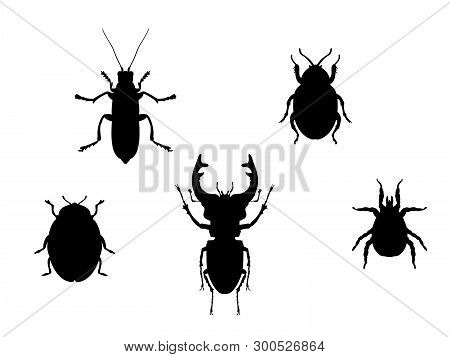 Set Beetles Insect Black Silhouette Animal. Vector Illustrator.