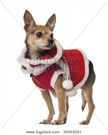 Crossbreed dog, 4 years old, in front of white background