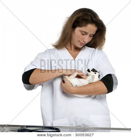 Vet examining a Dalmatian rabbit lying in front of white background