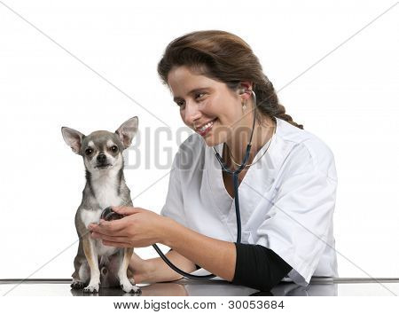 Vet examining a Chihuahua with a stethoscope in front of white background