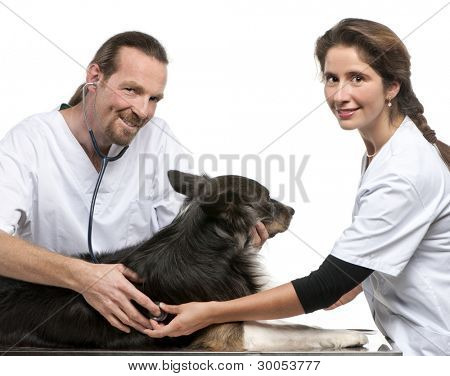 Vets examining a Border collie with a stethoscope in front of white background