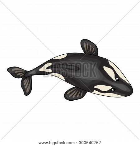 Top View Orca Whale Icon. Cartoon Of Top View Orca Whale Icon For Web Design Isolated On White Backg