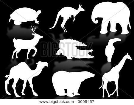 Wild animals silhouette to represent wildlife and nature poster