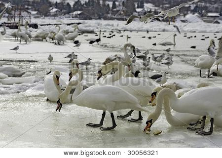 Winter Home For Birds