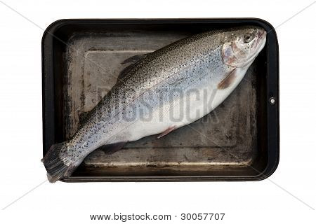 Trout in Tray