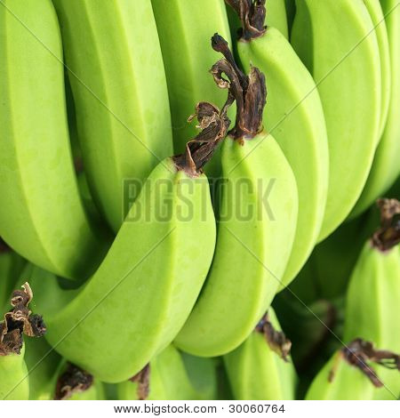 Green Bananas On A Tree, Thailand.