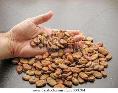Close Up Of  Broad Beans (vicia Faba) In Hand With Brown Wooden Background. Broad Beans In Hand Next