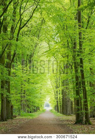 Beautiful Scenic Road In Spring Under Tall Trees With Vibrant Green Leaves. Sunshine Coming In From