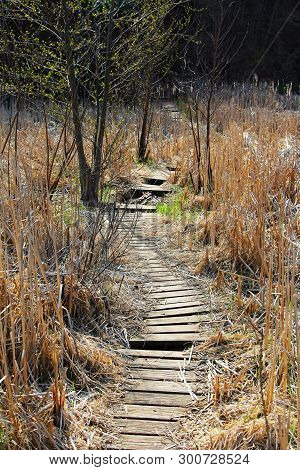 A Old, Worn Out Board Walk Through A Marshy Area Along The Genesee River In Rochester, New York