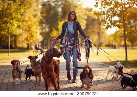 Happy dog walker woman enjoying with dogs while walking outdoors