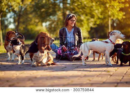 Walking dogs - Happy woman dog walker enjoying with dogs