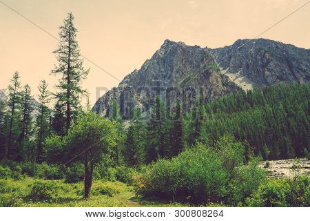 Small Cedar Against Mountain Creek In Valley Against Giant Rock. Water Stream In Brook From Mountain