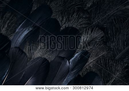 Close Up Photo Of Crow Feathers. Raven Wings Plumage. Dark Background.