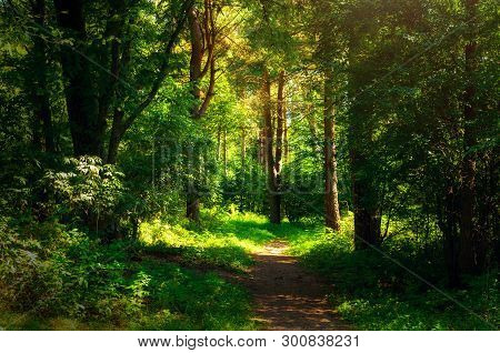 Forest landscape in sunny weather - forest trees and narrow path lit by sunset light. Forest nature in sunny day