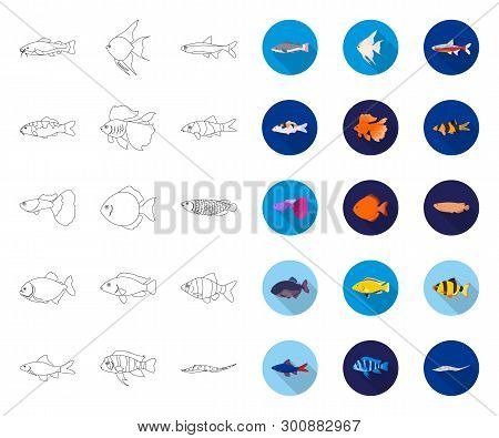 Different Types Of Fish Outline, Flat Icons In Set Collection For Design. Marine And Aquarium Fish V