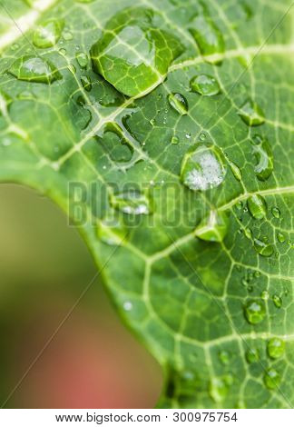 Closeup Of Raindrops On A Green Leaf