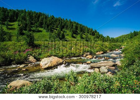 Fast Water Stream Of Mountain Creek Among Boulders In Bright Sunlight In Valley. Vivid Grass, Pink F