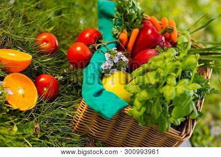 Fresh Organic Vegetables In Wicker Basket In The Garden.