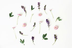 Floral, Pattern, Botanical Composition. Pink Daisy And Purple Alfalfa Flowers Isolated On White Tabl