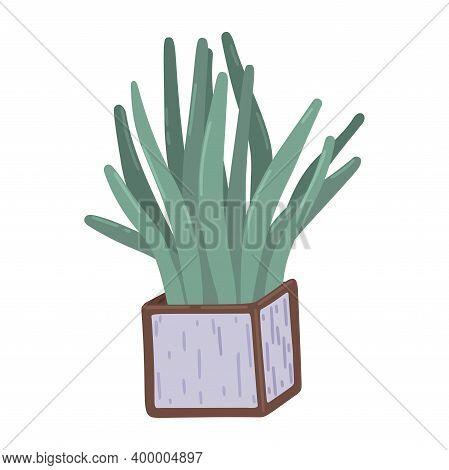 Sansevieria. Square Pot With Sansevieria, Indoor Plants, Decor Element, Interior Design, Floristry.