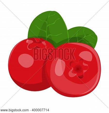Lingonberry Vector Isolated. Wild Healthy Red Berries