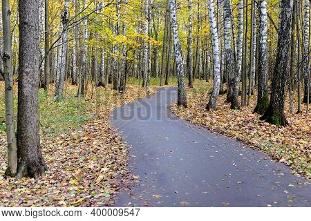 Curving Path Bending Road In Autumn Forest Park With Yellow Fall Tree Leaf
