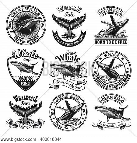Whale Emblems Set. Monochrome Design Elements With Whale Tails In Ocean And Text. Nature Or Wildlife