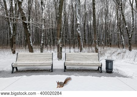 Benches In The Winter City Park. Filled Up With Snow. Snow Covered Trees.