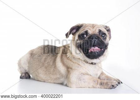 Portrait Of A Dog On Street. Small Dog On Street. Close Up Of Dog. Cute Little Dog Portrait. Beautif