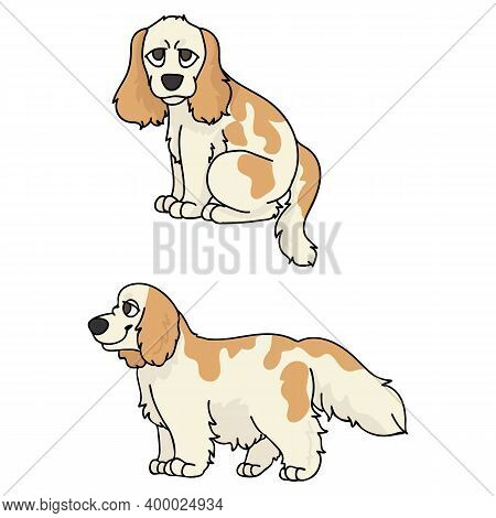 Cute Cartoon Cocker Spaniel Puppy Vector Clipart. Pedigree Kennel Doggie Breed For Kennel Club. Pure