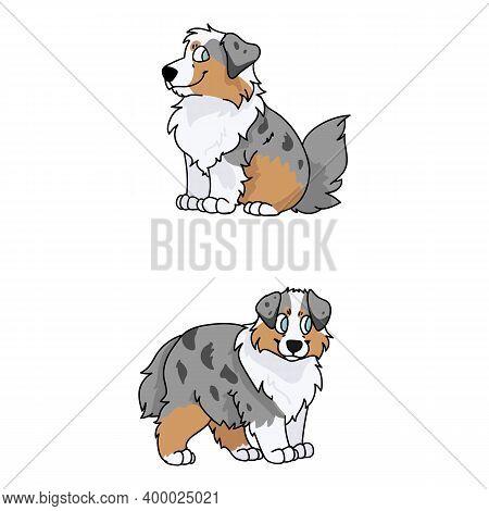 Cute Cartoon Australian Shepherd Puppy Vector Clipart. Pedigree Farm Dog For Kennel Club. Purebred D