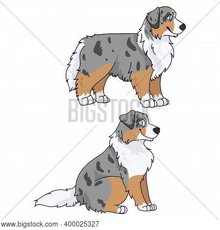 Cute Cartoon Australian Shepherd Dog Vector Clipart. Pedigree Farm Puppy For Kennel Club. Purebred D