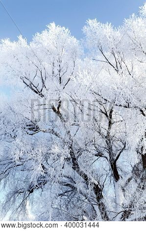 Winter landscape, frosty winter trees on the background of the blue sky, winter forest landscape, winter forest trees in sunny weather. Winter landscape with picturesque winter nature