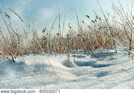 Winter landscape, snowy covered winter field and frozen winter plants at the sunset, natural sunset winter view of the winter field lit by soft sunlight