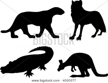 Vector art on wildlife isolated on white background poster