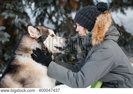 Alaskan Malamute Looking At Each Other With Woman In Winter Forest. Close Up.
