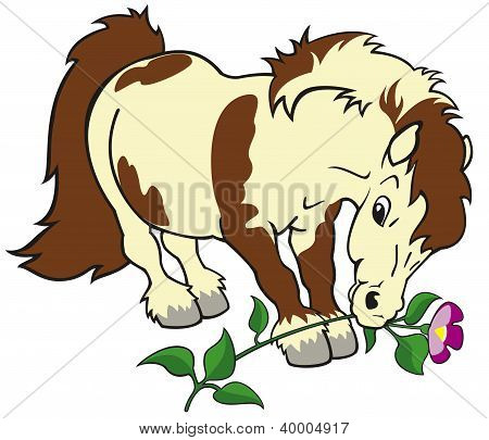 pony horse with flower