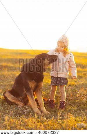 Happy Girl Caressing Obedient Dog In Field
