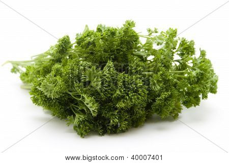 Green Parsley for Cooking