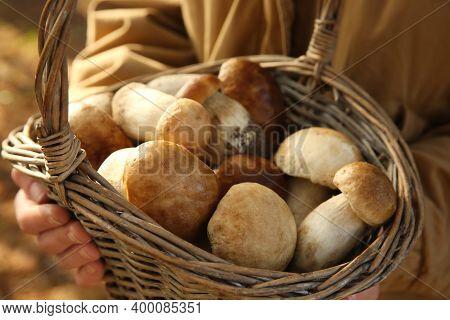 Woman Holding Basket With Porcini Mushrooms Outdoors, Closeup
