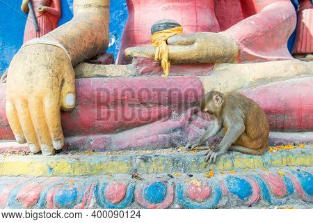 Monkey Living In Swayambhunath Temple (other Name Called Monkey Temple) This Place Is One Of The Hol