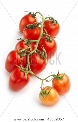 vine red tomatoes isolated on white background